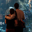 Couple hugging and looking through glass at the aquarium.