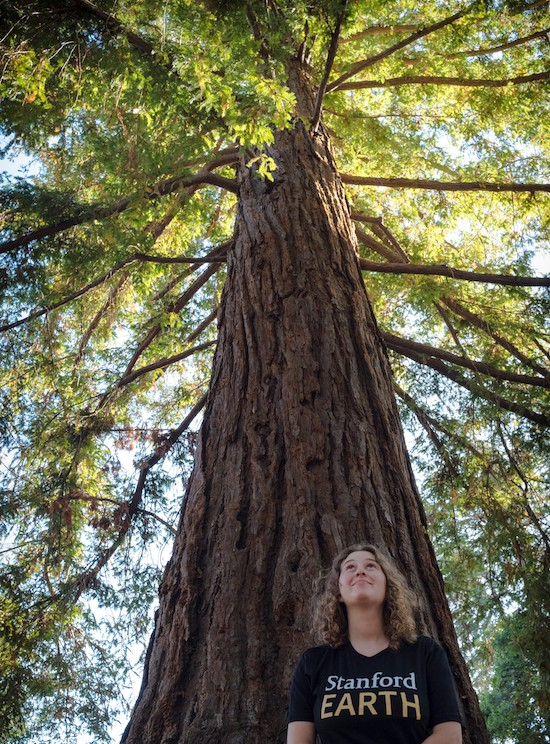 Student in front of redwood tree.