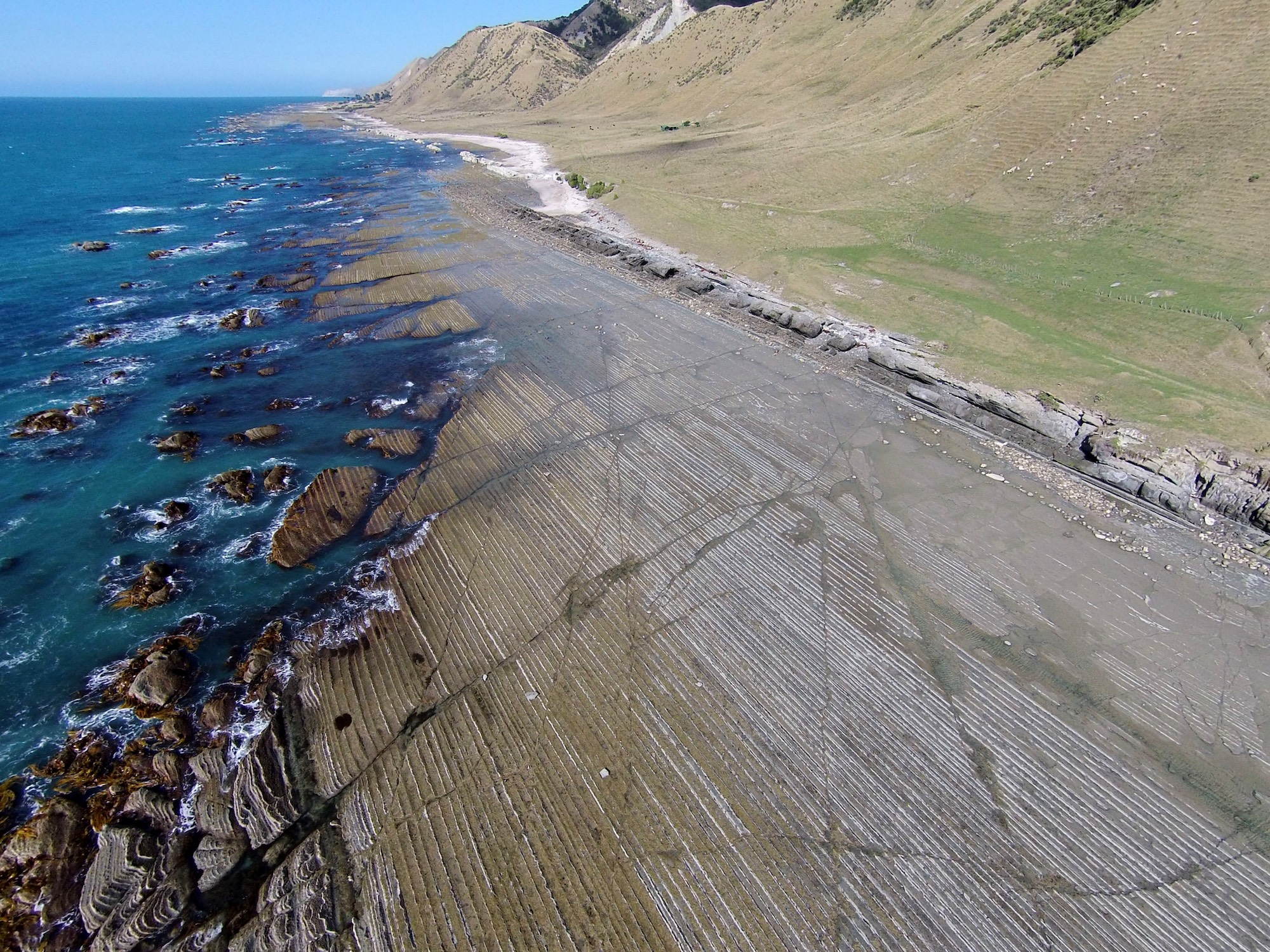 Turbidites at low tide, Mahia Peninsula, New Zealand