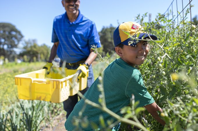 Two volunteers help at the O'Donohue Family Stanford Educational Farm