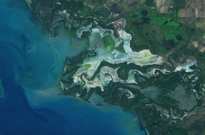 Satellite image of mangroves
