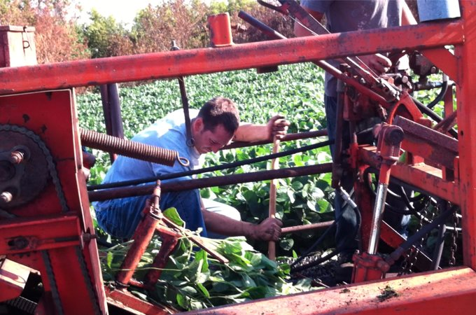 Nick Halla Soybean root nodule harvesting