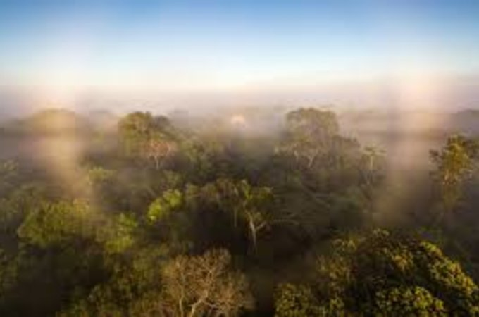 treetops of Amazon rainforest