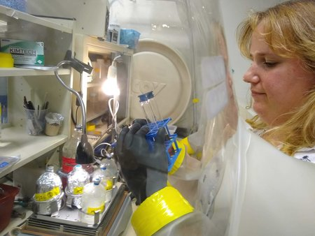 Marisa Mayer checking on her purple phototrophs in the anaerobic chamber.