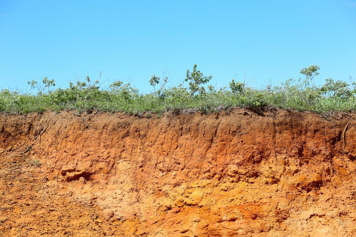 soil and grass cliff