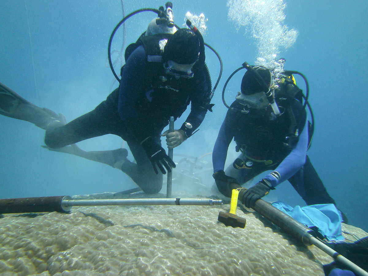 Divers collecting coral sample.