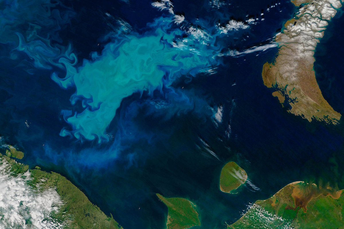 Phytoplankton bloom in the Arctic