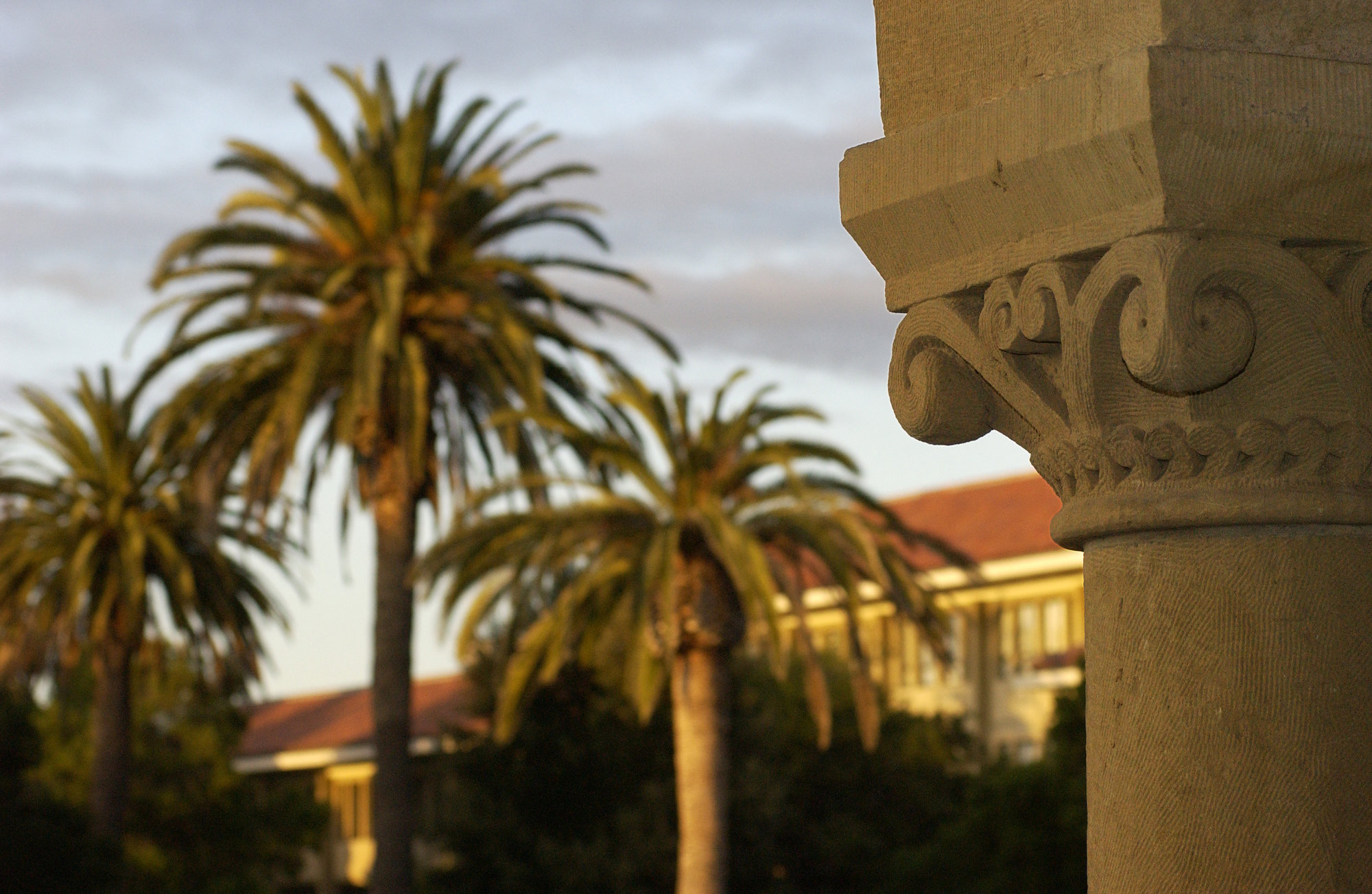 palm trees on quad by Linda A Cicero, Stanford News Service