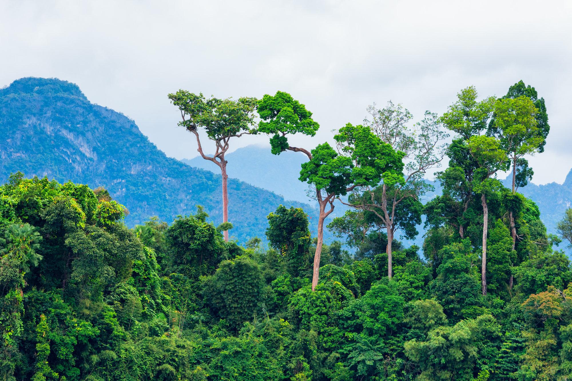 amazon rainforest 2019