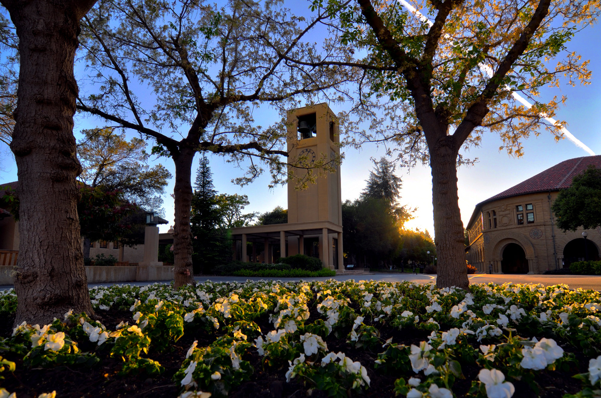 Stanford's clock tower and quad