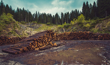 Stack of cut logs in front of forest.
