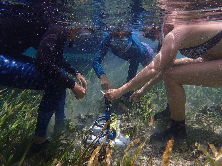 Students doing research underwater.